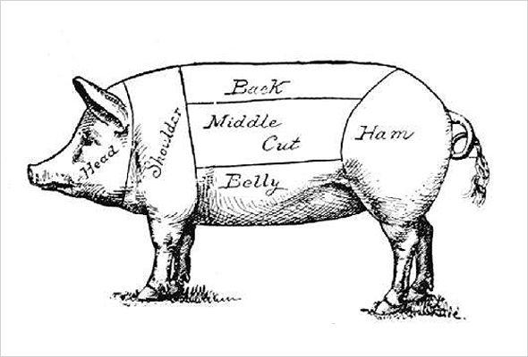 york pig diagram