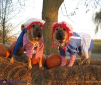 1000+ images about Costume Ideas for Pets on Pinterest ...