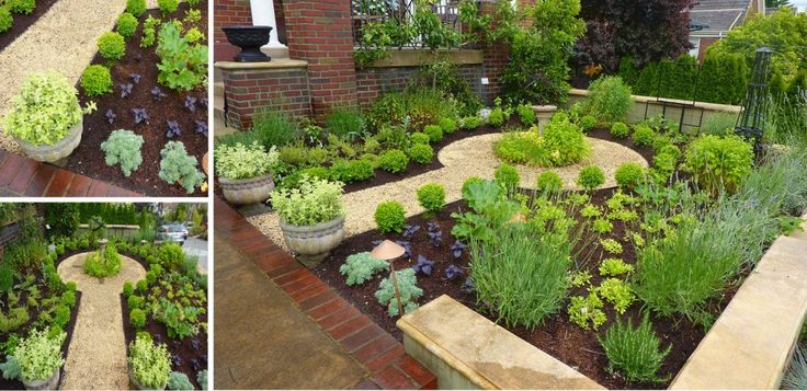 Formal edible front yard planted with herbs and veggies