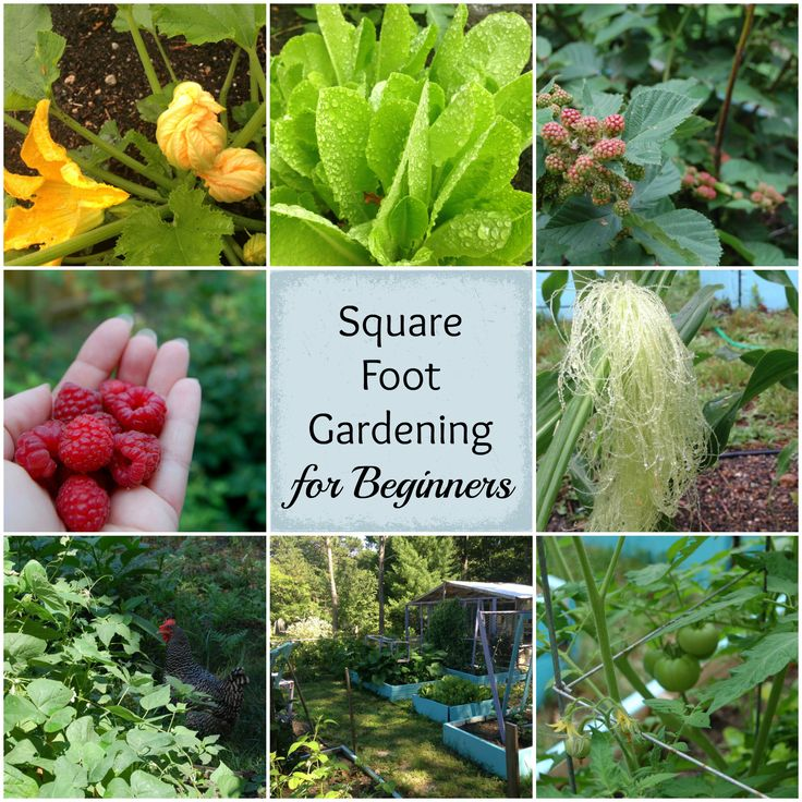 Best 25 Square Foot Gardening Ideas On Pinterest Square Foot