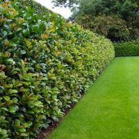 25+ Best Ideas about Natural Fence on Pinterest | Living ...