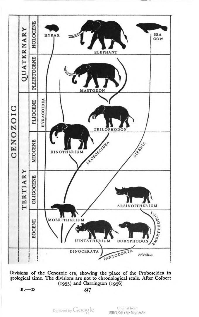 An elephant tree! Elephants: A short account of their