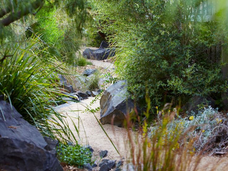 291 Best Images About Native Bush Garden On Pinterest Gardens