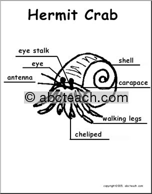Animal Diagrams: Hermit Crab (labeled and unlabeled