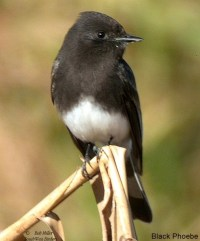 17 Best images about Chandler,Az backyard birds on ...