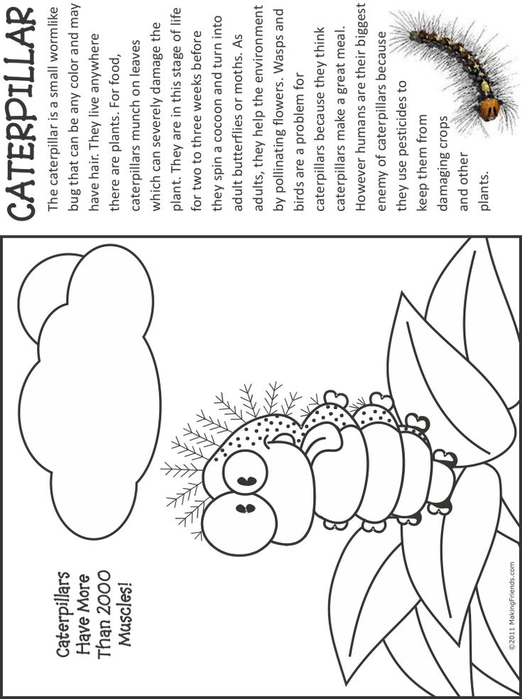 1000+ images about Bugs: Caterpillar on Pinterest