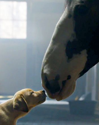 """Budweiser """"Puppy Love"""" Super Bowl Commercial: Watch Best Buds Ad Now! – Us Weekl"""