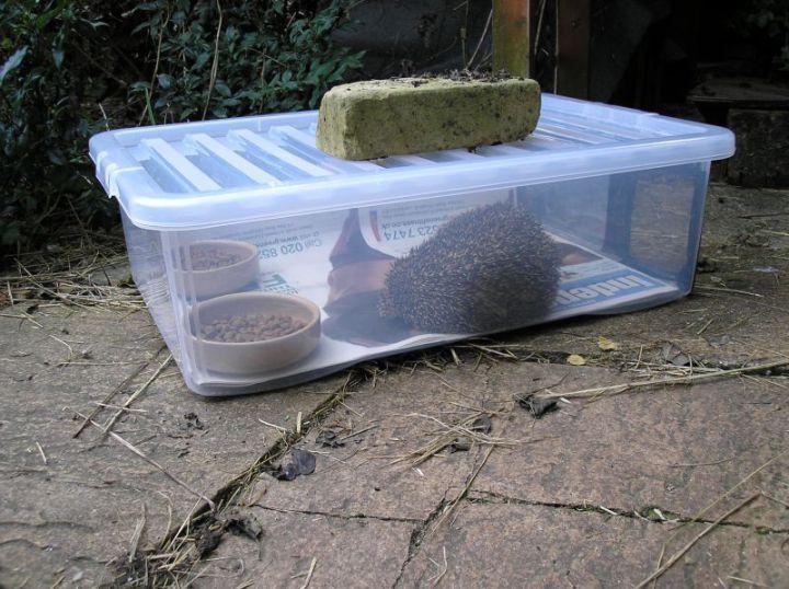 25 Best Ideas About Hedgehog House On Pinterest Hedgehog Home