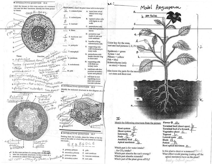 Top 248 ideas about Plant Systems: Ch 2 on Pinterest