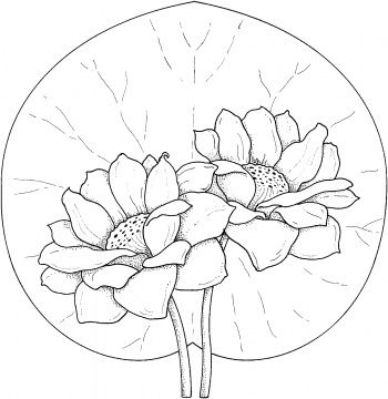 17 Best images about Flower printables on Pinterest
