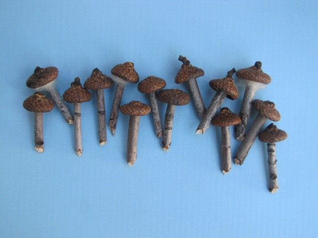 Acorn cap mushroooms for your fairy house/garden.  There are also several other DIY fairy house/garden accessories on this
