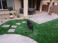 1000+ images about Pet Friendly Backyard on Pinterest ...