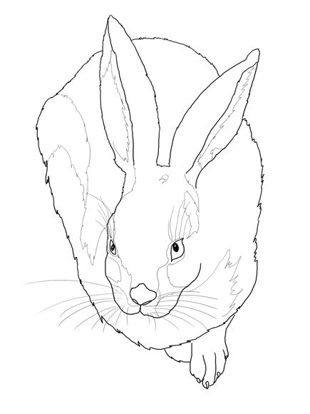1288 best images about colouring sheets on Pinterest