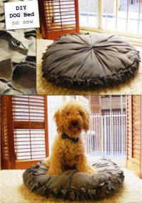 110 best images about DIY for Animal Shelters on Pinterest