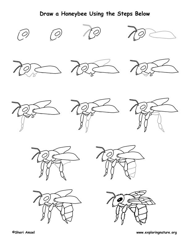 228 best bee line drawing images on Pinterest