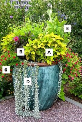 57 Best Images About Container Gardening Ideas For You On