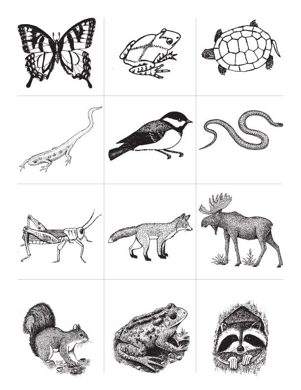 25+ best ideas about Animal classification activity on