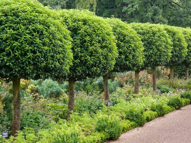 25 Best Ideas About Evergreen Trees On Pinterest Evergreen