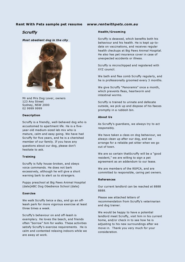 Rent With Pets Pet Resume  The Travel Pet Sitterdog
