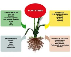 This image is interesting because it clearly lays out the different categories of plant stress