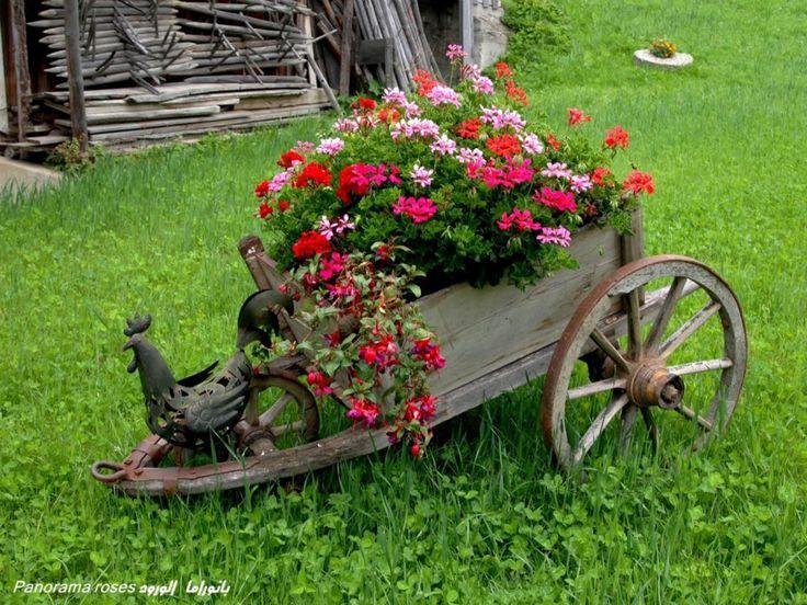 25 Best Ideas About Wheelbarrow Garden On Pinterest Wheelbarrow