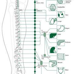 Foot Massage Therapy Diagram Best Automotive Wiring Diagrams Segmentos De La Columna Vertebral Las Instituciones En Pierna | Reflexologia Manos Pies ...