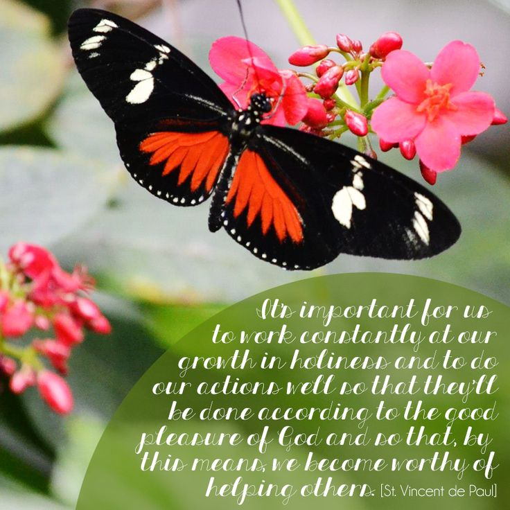St Vincent De Paul Quotes Butterfly Spring