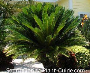 17 Best Images About Florida Plants On Pinterest Sun