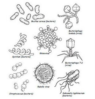 48 best images about Germs Lesson on Pinterest