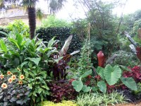 1000+ images about jungle theme garden on Pinterest ...