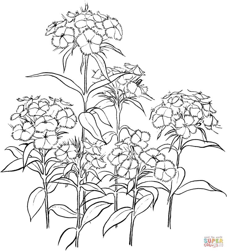 1038 best ideas about Drawing Flowers / Tutorials / Рисуем