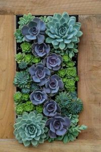 25+ best ideas about Succulent wall on Pinterest ...