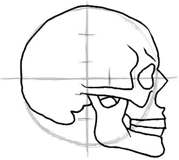 1000+ images about Skull Reference Material on Pinterest