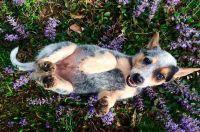Best 25+ Dog friendly backyard ideas on Pinterest