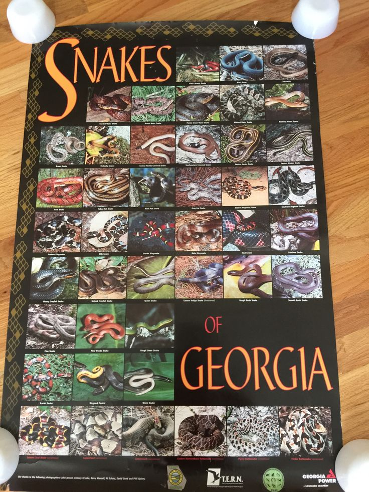 paint colors kitchen glass tiles snakes of georgia - poster | http://pinterest.com/folc ...