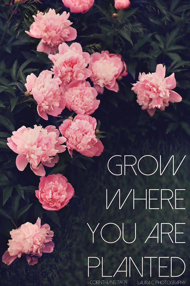 Grow Where You Are Planted  1 Corinthians 71424  Bible