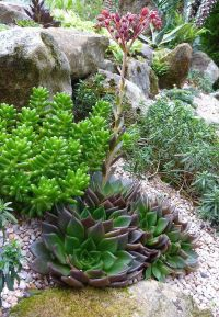 17 Best images about Rock Gardens (Alpines) on Pinterest ...
