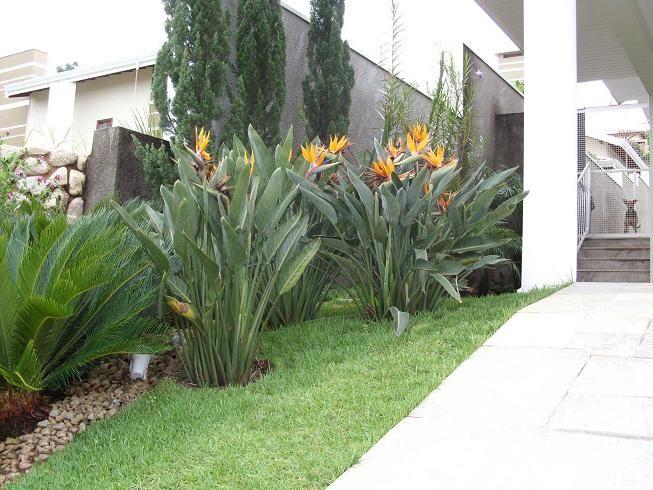 diseo jardines tropicales  Diseo de interiores  Ideas