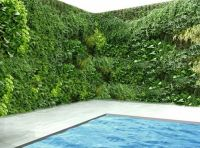 17 Best images about best plants around swimming pools on ...