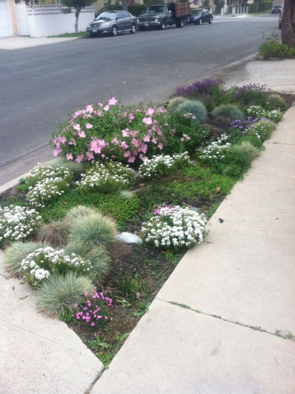 sidewalk landscaping ideas