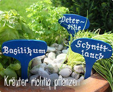 Krauter Richtig Pflanzen