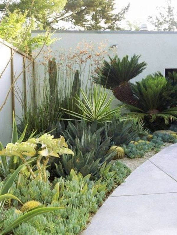 drought tolerant home garden landscaping