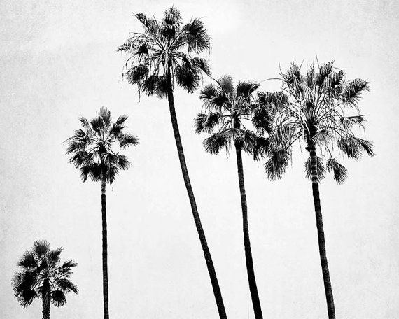 1000+ Ideas About Palm Tree Decorations On Pinterest