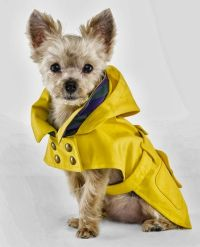 25+ best ideas about Dog Clothing on Pinterest