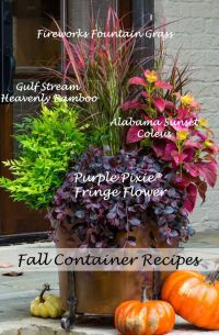 Best 25+ Fall potted plants ideas on Pinterest | Fall ...