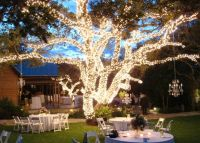25+ best ideas about Lighted Trees on Pinterest | Outdoor ...