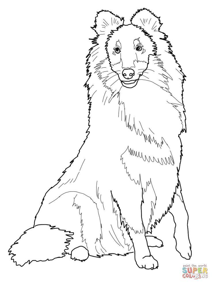 Images Of Sheepdog