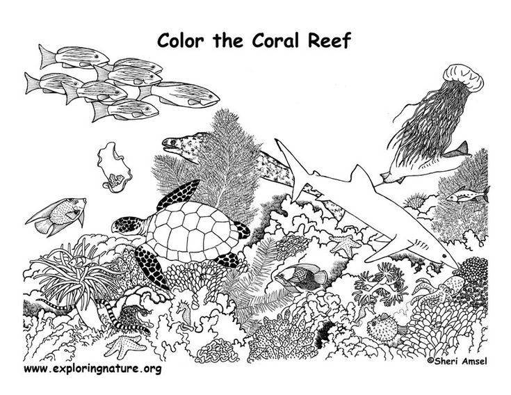 17 Best images about Coral reef coloring pages on