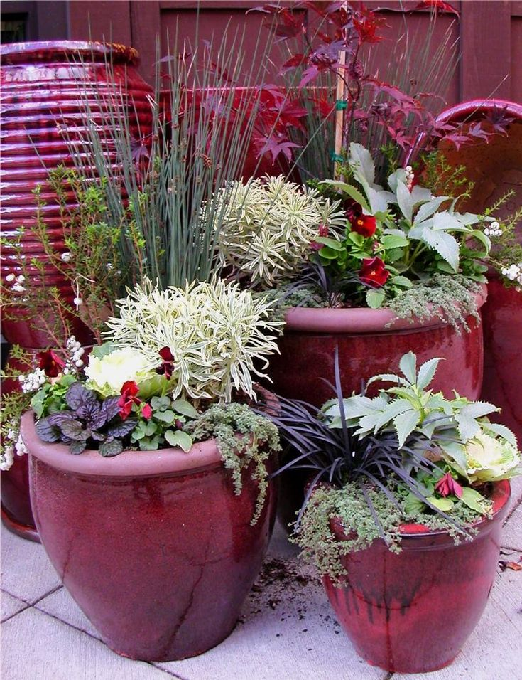 25 Best Ideas About Winter Container Gardening On Pinterest