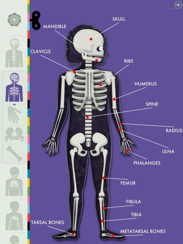 Diagram Of Different Parts Of Human Body 1 The Amazing Human Body